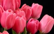 Тюльпаны,  гиацинты,  нарциссы