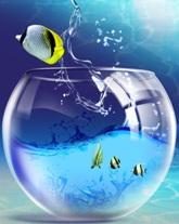 Аквариумы, рыбки, обслуживание, оборудование