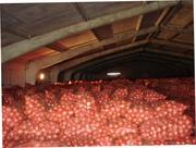 Продается лук репчатый 5+ Цена 12-13 руб за кг