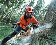 Спил деревьев профессионально